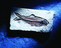 Balık Fosili - ART-202