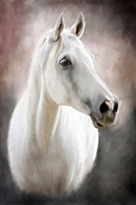 Beyaz At resim