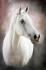 Beyaz At k0