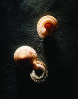 Deniz Kabukları - ART-213