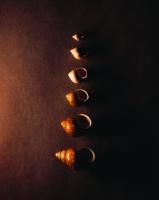 Deniz Kabukluları - ART-218
