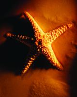 Deniz Yıldızı - ART-206