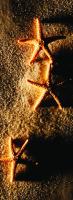 Deniz Yıldızları - ART-381