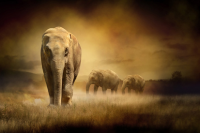 Elephants at Sunset - HT-C-055
