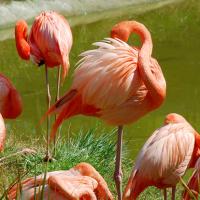Flamingolar - OZG-181