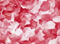Gül Yaprakları - ART-311