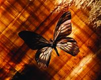 Kelebek - ART-221