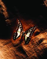 Kelebek - ART-222