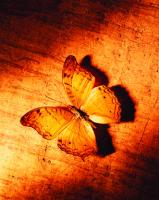 Kelebek - ART-228