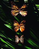 Kelebekler - ART-219