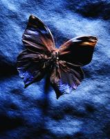 Kelebekler - ART-220