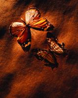 Kelebekler - ART-223