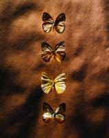Kelebekler - ART-225