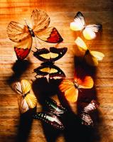Kelebekler - ART-227