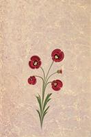 Kırmızı Lale - TTU-052