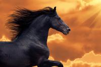 Kızıl Güneş ve Arap Atı - IMB-377