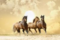 Koşan Atlar - IMB-C-375