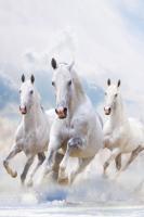 Koşan Beyaz Atlar - IMB-369