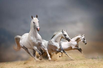 Koşan Kır Atlar resim
