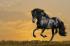 Koşan Siyah At k0