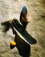 Kuş Tüyleri - ART-231