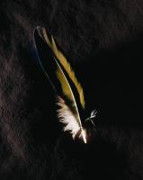 Kuş Tüyü - ART-230