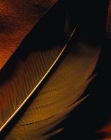 Kuş Tüyü - ART-235