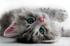 Sevimli Kedi k0