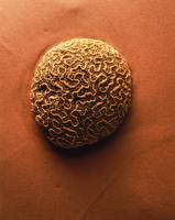 Taştaki Figürler - ART-207