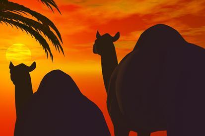 Two Camel resim