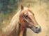 Yağlıboya At k0