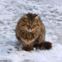 Yalnız Kedi - ABD-136