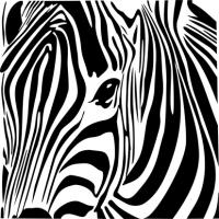 Zebra İllüstrasyon - IMB-C-381