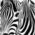 Zebra İllüstrasyon k0
