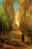 Avenue Of Poplars In Autumn k0