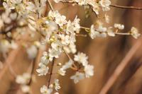 Bahar Çiçekleri - DM-C-176