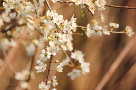 Bahar Çiçekleri 0