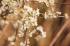 Bahar Çiçekleri k0