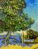 Chestnut Tree in Blossom k0