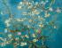 Çiçek Açan Badem Ağacı - Almond Blossoms k0