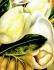 Flower Paintings k0