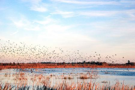 Göçmen Kuşlar resim