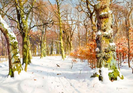 Karlı ve Güneşli Kış Manzarası resim
