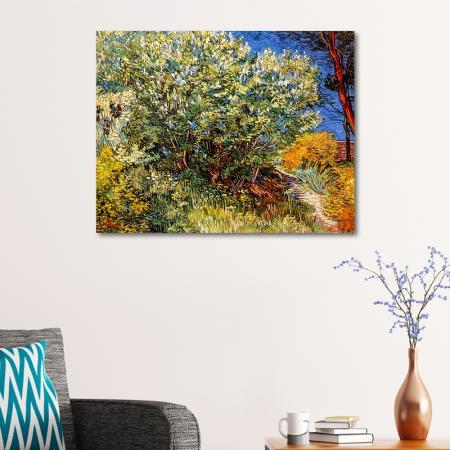Lilac Bush resim2