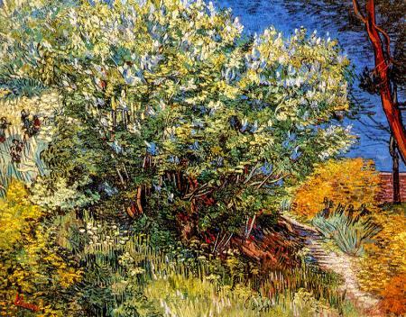 Lilac Bush resim
