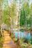 Orman ve Göl k0