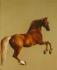 Şahlanan At k0