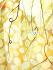 Yellow Flowers k0