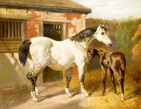 Beyaz At Kahverengi Tay - HT-C-009