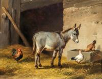 Eşek ve Tavuklar - HT-C-037
